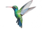 Colibri, the codec for perfect quality and fast distribution of professional AV over IP